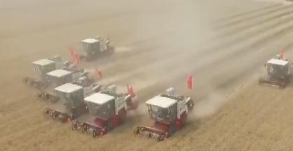 山东小麦.png